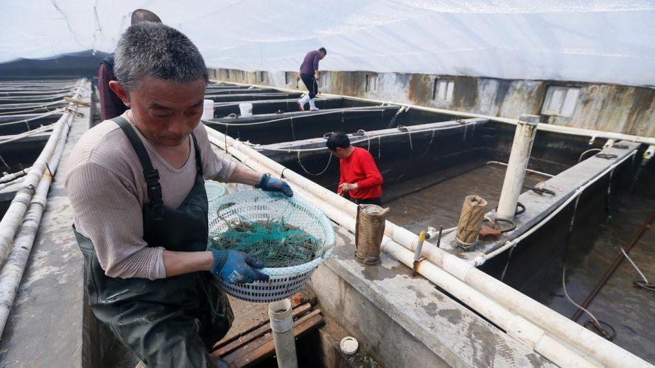 Importación ce Camarones en China 20200710