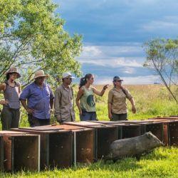 Son dos machos y dos hembras, que fueron trasladados desde Río Cuarto a la provincia de Corrientes, donde tras cumplir una cuarentena en una reserva en cercanías de la capital, pasaron en las últimas horas al corral en el Iberá.