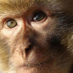 Según un empleado del Parque Pereyra, estos simpáticos monos viven en el lugar desde hace años.