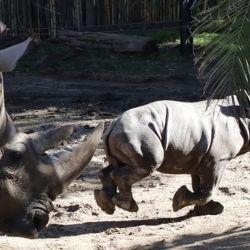 Al momento de nacer, el pequeño Anastasio acusó un peso de 75 kilos en la balanza.