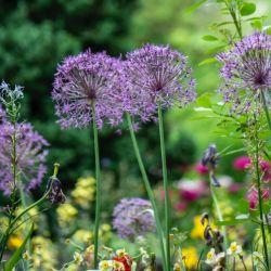 De estos jardines provienen las materias primas de este gigante de la cosmética natural.