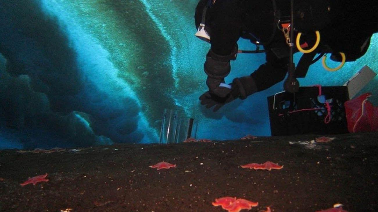 La investigación estuvo a cargo de un equipo de ecólogos marinos de la Universidad Estatal de Oregón, Estados Unidos.