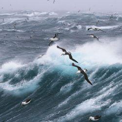 Los investigadores empezaron a estudiar la relación entre los albatros y las embarcaciones pesqueras.