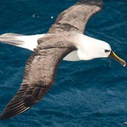 Las aves marinas se sienten atraídas por los barcos de pesca, pero a menudo pueden enredarse en redes y engancharse a las líneas.