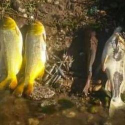 Los primeros peces muertos comenzaron a aparecer a la altura de la ciudad cordobesa de Bell Ville.