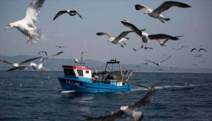 Un grupo de biólogos descubrió que los albatros marinos pueden ser grandes aliados en la lucha contra la sobrepesca.