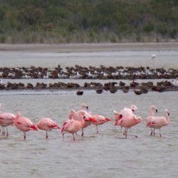 Fauna de la laguna La Petrona, en Villarino, Buenos Aires.
