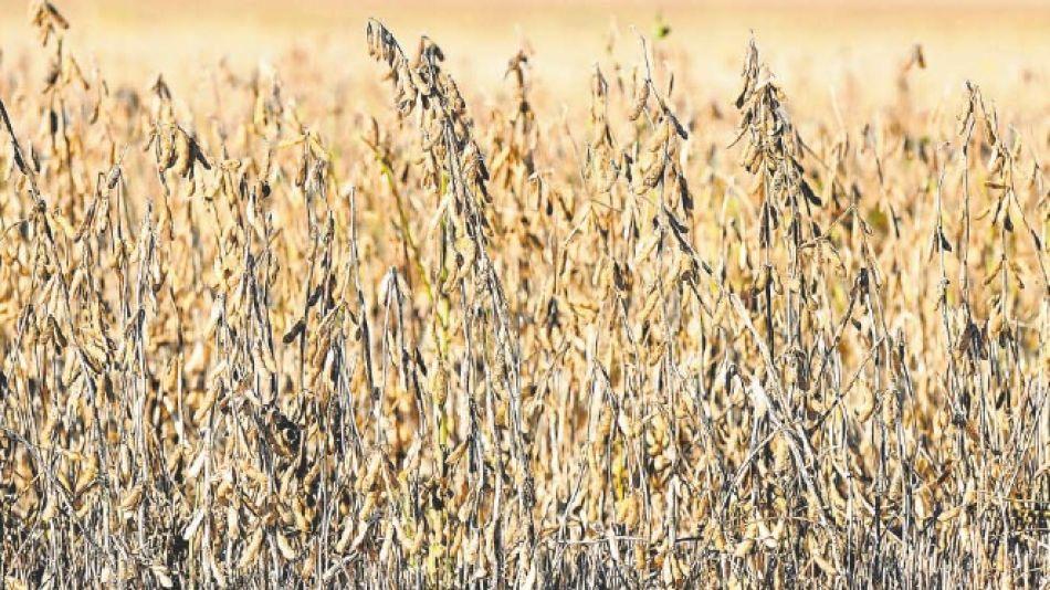 Sequía en los campos.