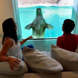 Los visitantes miran una morsa desde su habitación de hotel en el parque de animales Pairi Daiza en Brugelette. | Foto:JOHN THYS / AFP