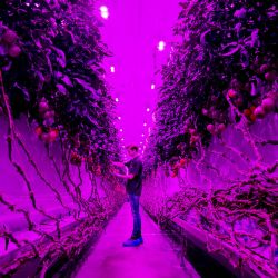 Un empleado trabaja en la sala de producción de PlantLab en Amsterdam, Países Bajos. - La compañía cultiva cultivos en áreas de cultivo de alta tecnología, que ya no requieren luz natural y pueden cultivarse en capas apiladas. | Foto:DE WAAL / ANP / AFP