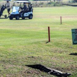 Los golfistas se han adaptado y comparten el espacio con ellos sin ningún problema.