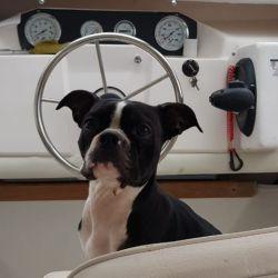 Antes en un gomón, ahora en una embarcación cabinada, la veterinaria recorre las islas para atender a los animales que requieran su atención.