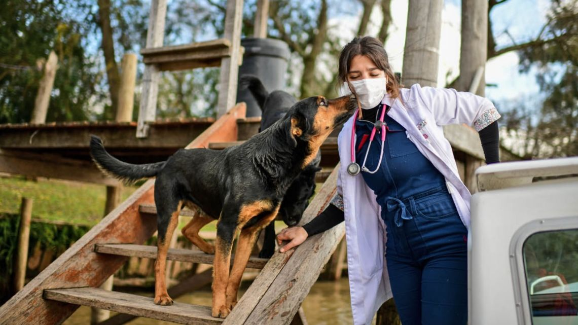 Argentine veterinarian Leila Peluso provides assistance to the pets and farm animals of the Paraná Delta, in the municipality of Tigre, Buenos Aires Province.