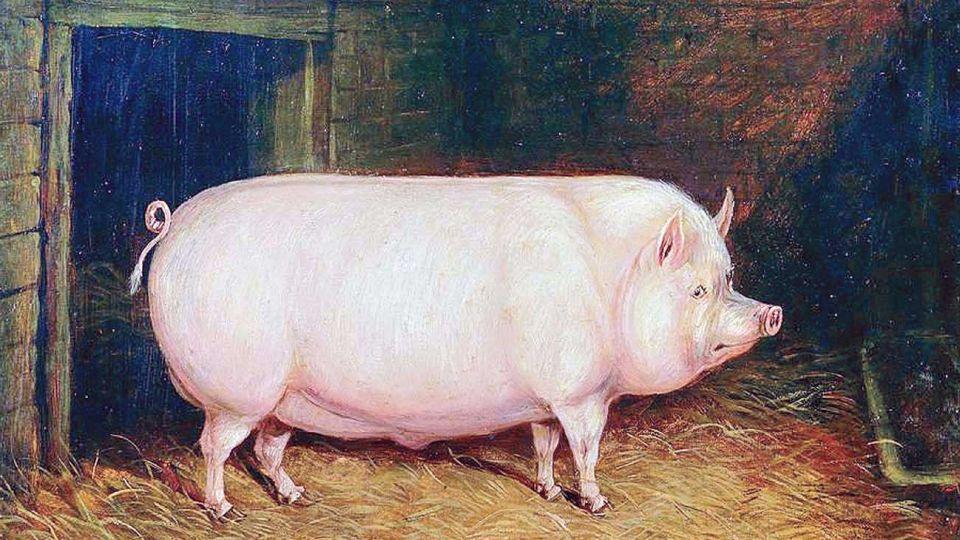 20200801_cerdo_cedoc_g
