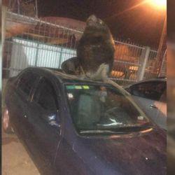 El hecho tuvo lugar este fin de semana pasado en los autos estacionados en las calles internas del puerto marplatense.