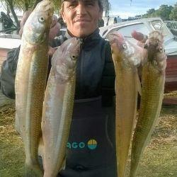 De mar y en Sauce Grande, Monte Hermoso volvió a la pesca con muy buenos pejerreyes.