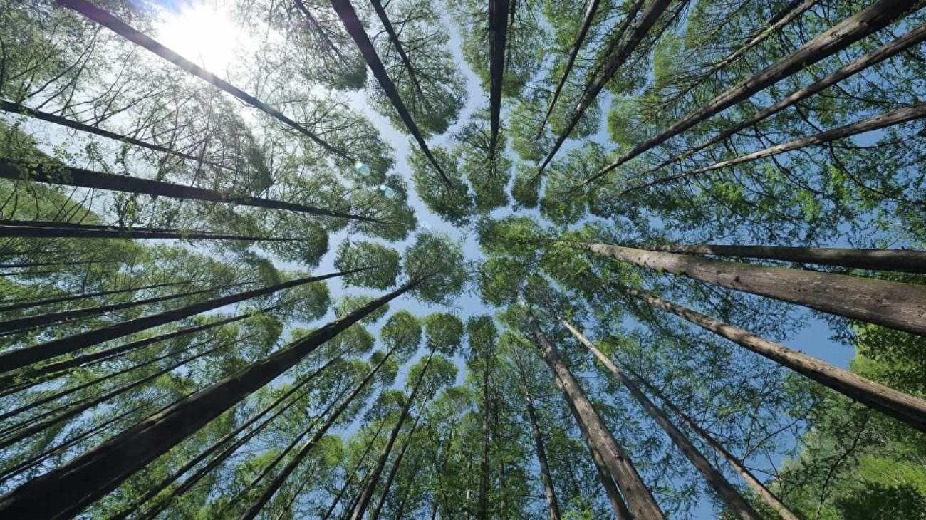 El planeta perdió gran cantidad de árboles e insectos en los últimos años.
