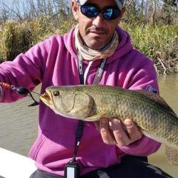 Las primeras tarariras ya picaron en el río Uruguay.