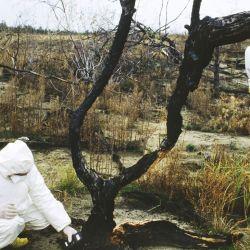 La explosión de uno de los reactores de la planta nuclear de Chernóbil, Ucrania, el 26 de abril de 1986, causó 47 muertes.