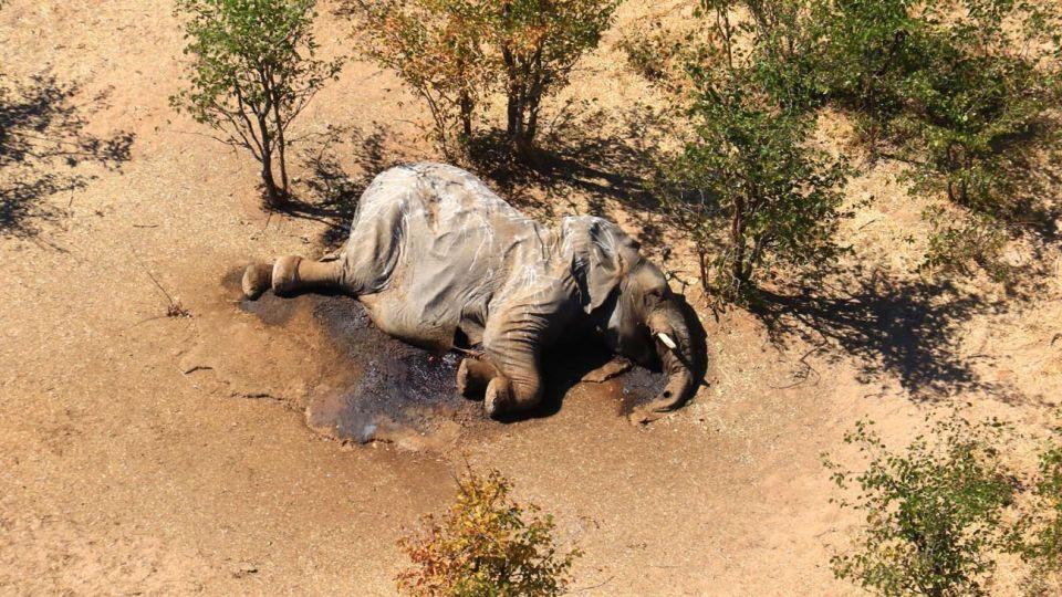 Elefantes muertos en Botswana 20200807