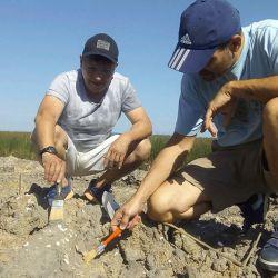 La pieza encontrada pertenecería al astrágalo, un componente de una de las patas de un perezoso gigante que pesaría entre 700 y 800 kilos.