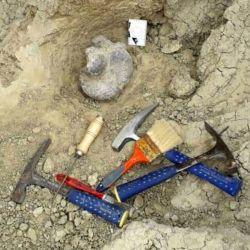La pieza encontrada pertenecería al astrágalo, un componente de una de las patas de un perezoso gigante.