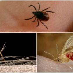 Bunyavirus: se detectó en China, y lo transmiten mosquitos y garrapatas.