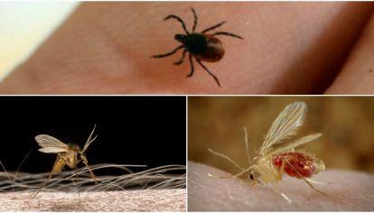 Bunyavirus, como un dengue transmitido por otros mosquitos que no son el Aedes Aegypti.