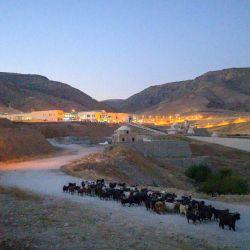 Esta fotografía muestra a un pastor alejándose con su rebaño de la ciudad de Hasankeyf recién construida, parte del proyecto de la presa de Ilosu ubicada a lo largo del río Tigris en la provincia de Batman en el sureste de Turquía. | Foto:BULENT KILIC / AFP