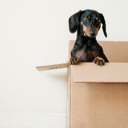 Muchas familias y personas que viven solas decidieron adoptar perros durante la cuarentena.