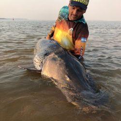 En paso de la patria capturan un surubí de 70 kilos, lo marcan para estudiarlo y lo devuelven al río Paraná.
