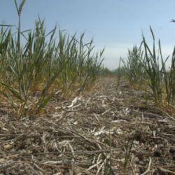 Chaco sequía