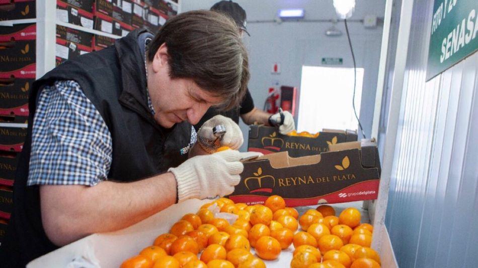 Exportación de naranjas
