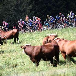 El grupo de ciclistas sube durante la cuarta etapa de la 72a edición de la carrera ciclista Criterium du Dauphine, 153 km entre Ugine y Megeve. | Foto:Anne-Christine Poujoulat / AFP