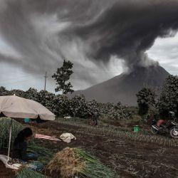 Los agricultores cosechan sus cultivos de cebolla mientras el monte Sinabung arroja ceniza volcánica durante una erupción vista desde la aldea de Sukandebi en Karo. | Foto:IVAN DAMANIK / AFP