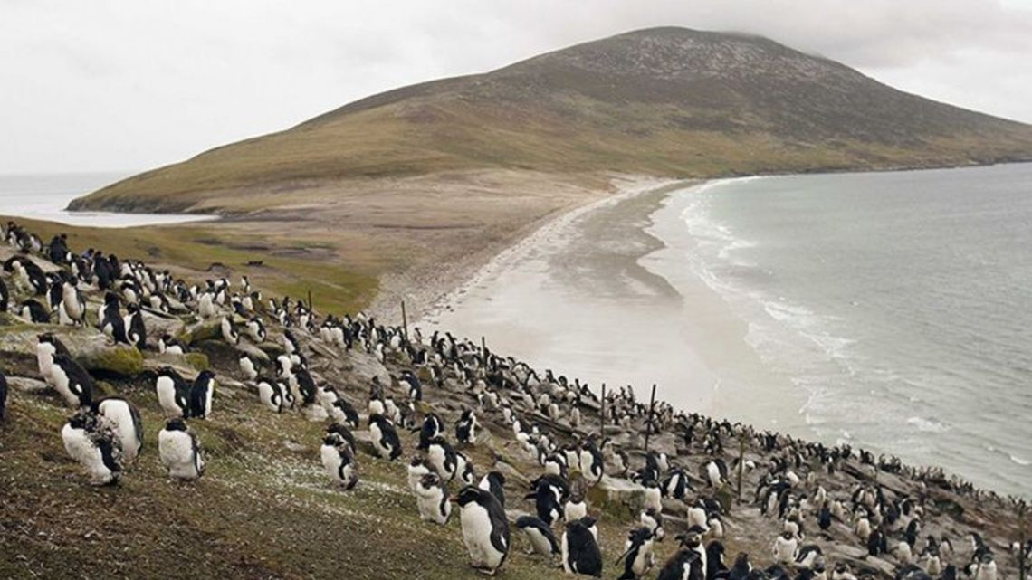 Penguins pictured on the Malvinas (Falkland) Islands.