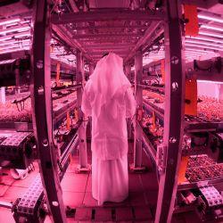 Una imagen muestra las granjas al-Badia de los Emiratos Árabes Unidos en Dubai, una granja vertical interior que utiliza tecnología hidropónica innovadora para cultivar frutas y verduras durante todo el año. | Foto:Karim Sahib / AFP