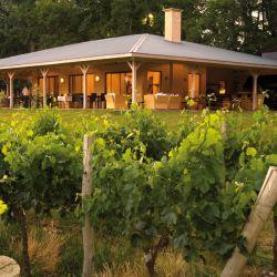 Entre los sitios más recomendados se encuentran los viñedos de la zona de Cuyo.