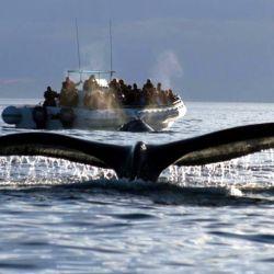 Los estruendos generados son una causa probable de varamientos y muertes de ballenas.