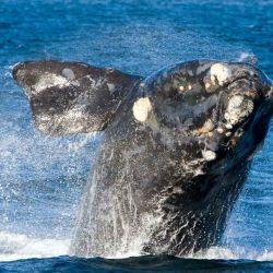 Los efectos de la contaminación acústica a corto y medio plazo sobre los ecosistemas marinos pueden llevar a cambios en el comportamiento de los cetáceos.