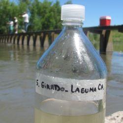 Estudios demuestran que el arroyo Girado, que conecta con la laguna de Chascomús, posee concentraciones de hormonas sexuales humanas.