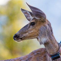 """Lo que preocupa a los expertos es la velocidad inusitada con la que, actualmente, se está produciendo la llamada """"sexta extinción"""" de los animales."""