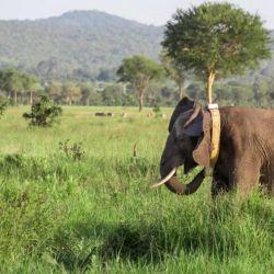 Entre 150 y 200 especies de plantas, insectos, pájaros y mamíferos se extinguen diariamente.