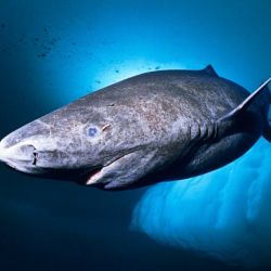 El estudio se realizó en 2016 sobre un espécimen que vive en los océanos desde 1627.