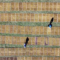 Esta imagen aérea muestra a los agricultores secando hojas de tabaco recién cosechadas en Temanggung, Java Central. | Foto:Arya Manggala / AFP
