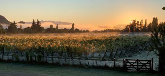 El mapa de la producción vitivinícola en Argentina expande sus fronteras