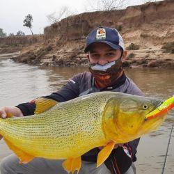 A pesar de la sequía , los incendios y la bajante, los dorados del Paraná siempre están presentes.