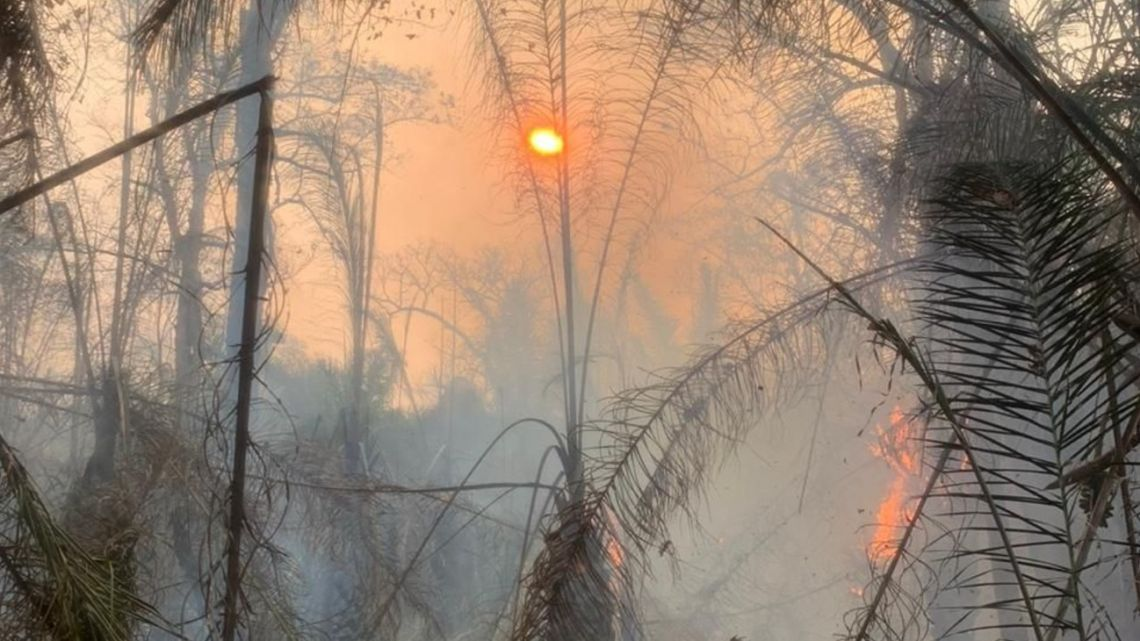 Fires have ripped through the Arara Azul blue macaw sanctuary in Brazil's Pantanal wetlands. The land was used to protect some of the world's last remaining blue macaws.