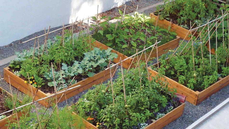 Cultivos y huertas orgánicas 20200828