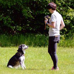 Cuando el perro tenga el juguete en la boca, lo ideal es que la persona se aleje un poco y atraiga al animal. Foto: Benjamin Nolte/dpa